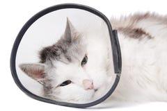 Gatto che porta un collare protettivo Fotografia Stock