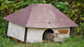 Gatto che posa nella sua fossa di scolo stock footage