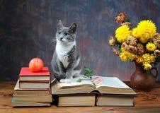 Gatto che posa per sui libri ed i fiori Fotografia Stock Libera da Diritti