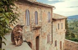 Gatto che raffredda cortile interno del palazzo rurale del ot della casa alla sera Toscana Alberi verdi, colline della campagna d fotografie stock