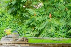 Gatto che riposa nel parco e che esamina giusto voi fotografia stock libera da diritti
