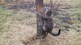 Gatto che scala l'albero Fotografie Stock Libere da Diritti