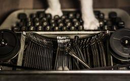 Gatto che scrive sulla macchina da scrivere sporca e d'annata Fotografia Stock