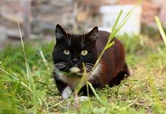 Gatto che si apposta nell'erba fotografie stock
