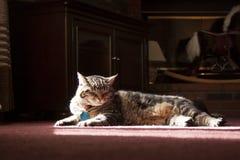 Gatto che si espone al sole Fotografia Stock Libera da Diritti