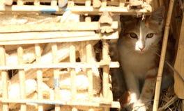 Gatto che si nasconde dal sole Immagini Stock Libere da Diritti