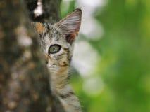 Gatto che si nasconde dietro il ramo fotografia stock