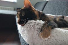 Gatto che si rilassa nel suo letto Fotografia Stock