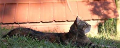 Gatto che si rilassa nell'erba Fotografia Stock Libera da Diritti