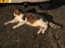 Gatto che si riposa vicino all'automobile Fotografia Stock Libera da Diritti