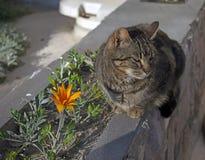 Gatto che si siede accanto al fiore fotografie stock libere da diritti