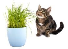 Gatto che si siede da una pianta Fotografia Stock Libera da Diritti