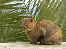 Gatto che si siede davanti alla palma Fotografie Stock