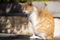 Gatto che si siede e che si rilassa all'aperto Immagini Stock