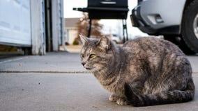 Gatto che si siede fuori del garage Fotografia Stock Libera da Diritti