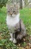 Gatto che si siede nel prato Fotografie Stock