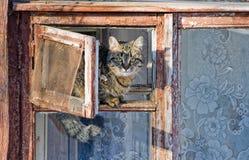 Gatto che si siede nella finestra Immagini Stock Libere da Diritti