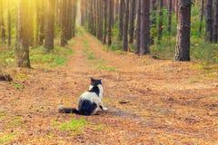Gatto che si siede nella foresta Immagini Stock Libere da Diritti
