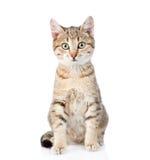 Gatto che si siede nella parte anteriore e che esamina macchina fotografica Isolato su bianco Fotografia Stock Libera da Diritti