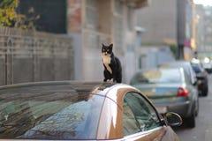 Gatto che si siede su un'automobile Immagine Stock Libera da Diritti