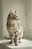 Gatto che si siede su un davanzale bianco della finestra fotografia stock libera da diritti