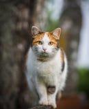 Gatto che si siede su un recinto Fotografia Stock