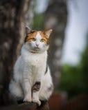 Gatto che si siede su un recinto Fotografie Stock