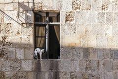 Gatto che si siede su una finestra fotografia stock