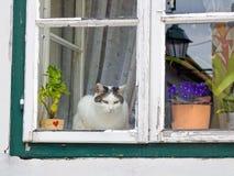 Gatto che si siede su una finestra Immagine Stock Libera da Diritti
