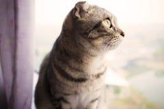 Gatto che si siede su una finestra Fotografie Stock Libere da Diritti