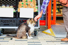 Gatto che si siede sul pavimento Immagini Stock Libere da Diritti