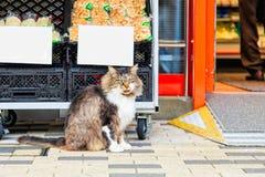 Gatto che si siede sul pavimento Fotografie Stock