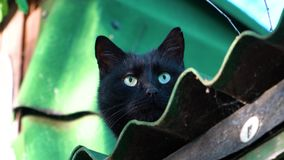 Gatto che si siede sul tetto archivi video