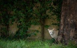 Gatto che si siede sull'erba vicino all'albero fotografia stock libera da diritti