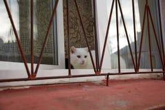 Gatto che si siede sulla finestra dietro le barre immagine stock