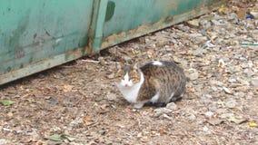 Gatto che si siede sulla ghiaia vicino al recinto del metallo archivi video