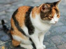 Gatto che si siede sulla pavimentazione della via fotografie stock libere da diritti