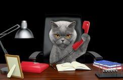 Gatto che si siede sulla sedia di cuoio con il telefono Isolato sul nero Immagine Stock Libera da Diritti