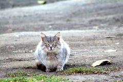 gatto che si siede sulla strada tagliata e sparsa con le foglie asciutte Fotografia Stock