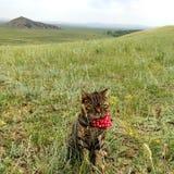Gatto che si siede sulle praterie Fotografia Stock