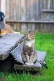 Gatto che si siede sulle scale Fotografie Stock Libere da Diritti