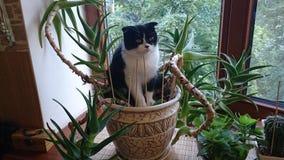 Gatto che si siede in un vaso con aloe immagine stock