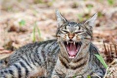 Gatto che si trova all'aperto sbadigliando fotografie stock