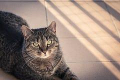 Gatto che si trova su un balcone, posante ad una foto Immagine Stock Libera da Diritti