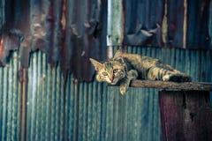 Gatto che si trova su un pavimento di legno che solleva uno zinco indietro fotografie stock