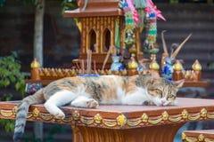 Gatto che si trova su una colonna fotografie stock libere da diritti