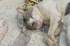 Gatto che si trova sul banco con le ferite e la malattia fotografia stock libera da diritti
