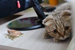 Gatto che si trova sul comodino con gli allievi dilatati fotografia stock libera da diritti