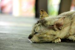 Gatto che si trova sul pavimento immagine stock libera da diritti