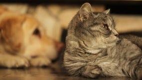 Gatto che si trova sul pavimento a casa Fotografia Stock Libera da Diritti